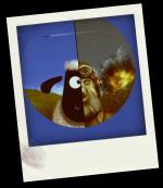 a Black Sheep never should be... irritated - Black Sheep Squadron PC/MAC game